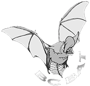 BC Bat